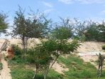 Bukit Pasir Slopeng di Desa Semaan, Kecamatan Dasuk, Sumenep