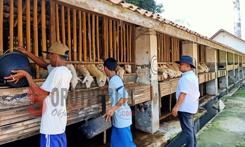 Sejumlah pekerja sedang memberi makan kambing di lokasi peternakan kambing Desa Mangli, Kecamatan Kaliwates, Jember milik Cak Omen
